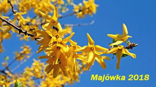 wiosna maj